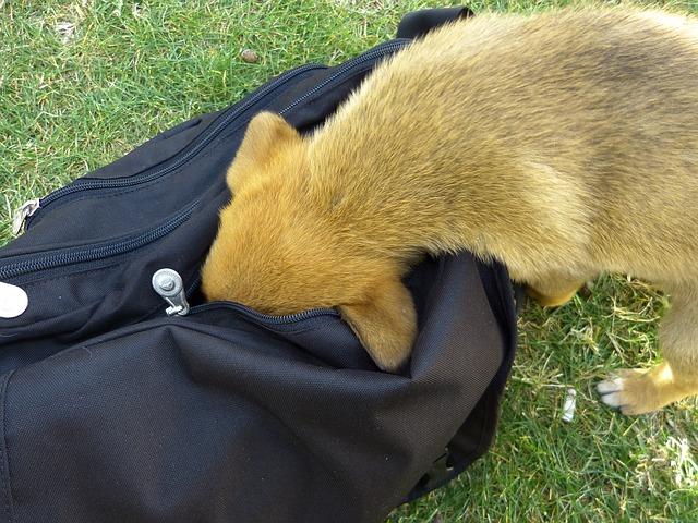 Hund Tasche Hundefutter