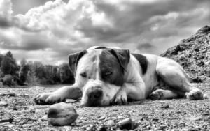 Hund mit Hundefutter