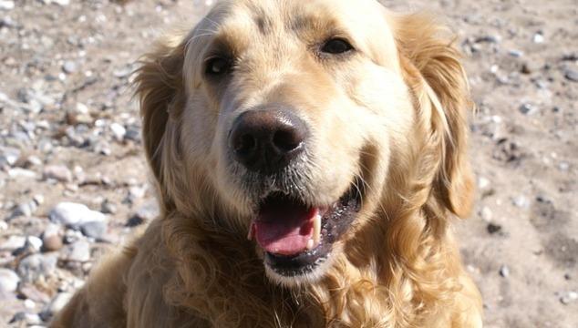 Hundefutter Dinner for Dogs Erfolgsgeschichte dank Retriever Dame