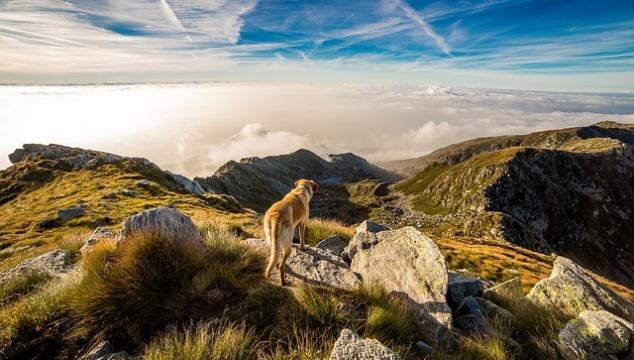 Hills Hundefutter für die Gesundheit des Hundes