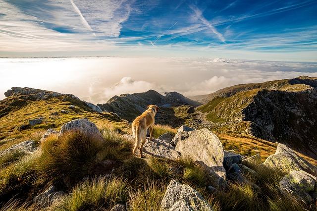 Hund Hills Hundefutter