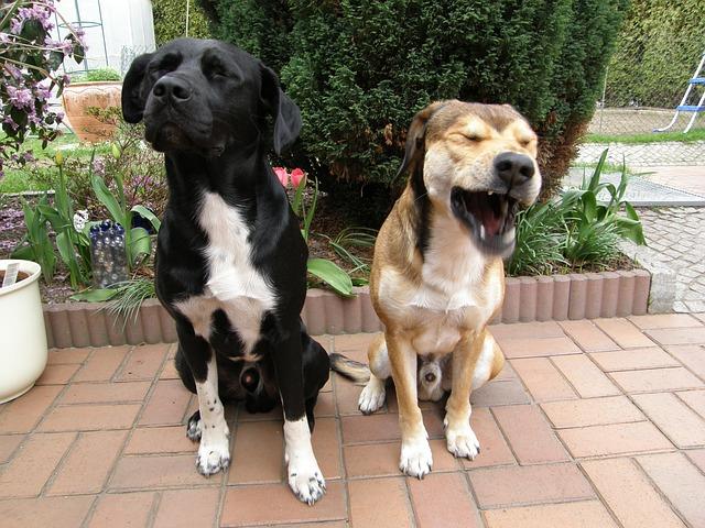 Hunde Fressverhalten