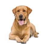 Hundefutter gratis default Artikelbild