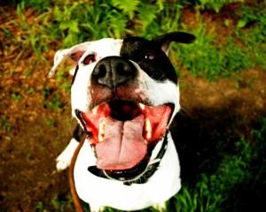 Selbstgekochtes Hundefutter als Alternative