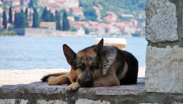 Hunde als tierische Mitmenschen im Dschungel der Stadt