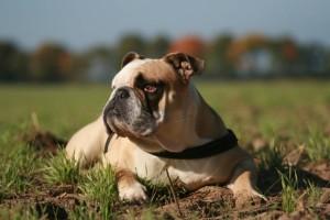 Hundefutter Tester Alfons