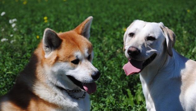 Hundefutter individuell für jeden Hund