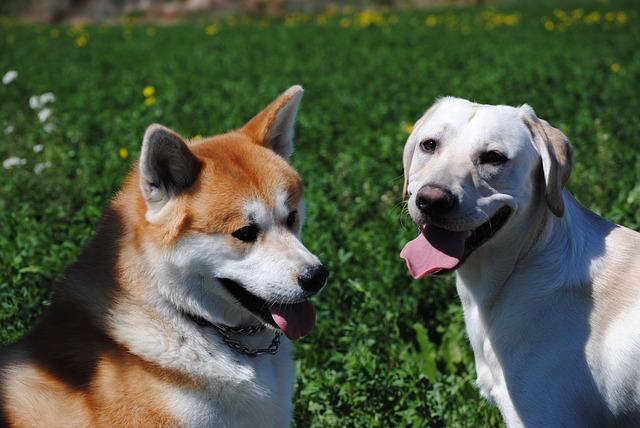 Individuelles Hundefutter Hunde