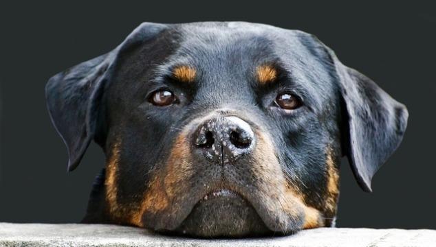 Hundefutter Royal-Canin