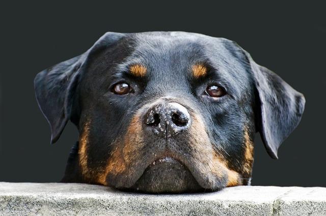 Hundefutter von Royal-Canin