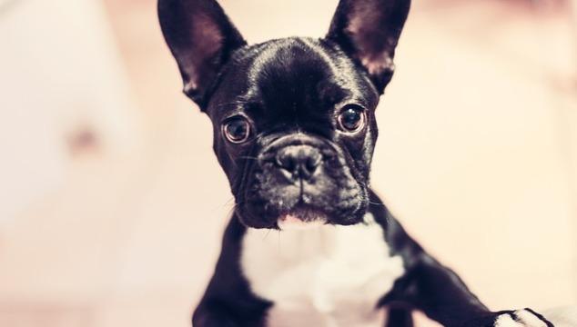 Hunderassen im Überblick – welches ist der beliebteste Hund?