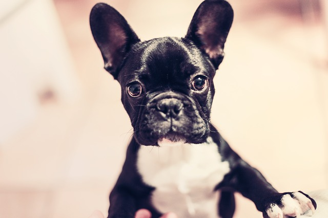 Die beliebtesten Hunderassen im Überblick