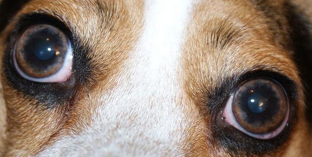 Platinum Hundefutter – ein hochwertiges Alleinfutter