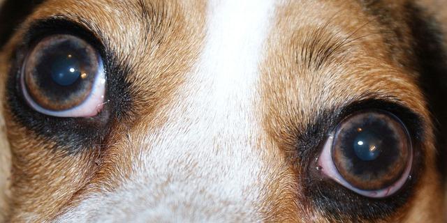 Platinum Hundefutter Alleinfutter