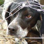 Südländische Hunde – Hunde in Not