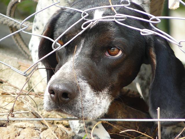 Südländische Hunde - Hunde in Not